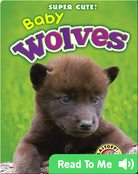 Super Cute! Baby Wolves