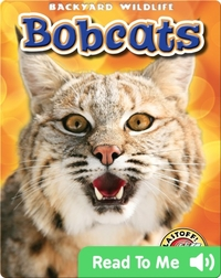 Backyard Wildlife: Bobcats
