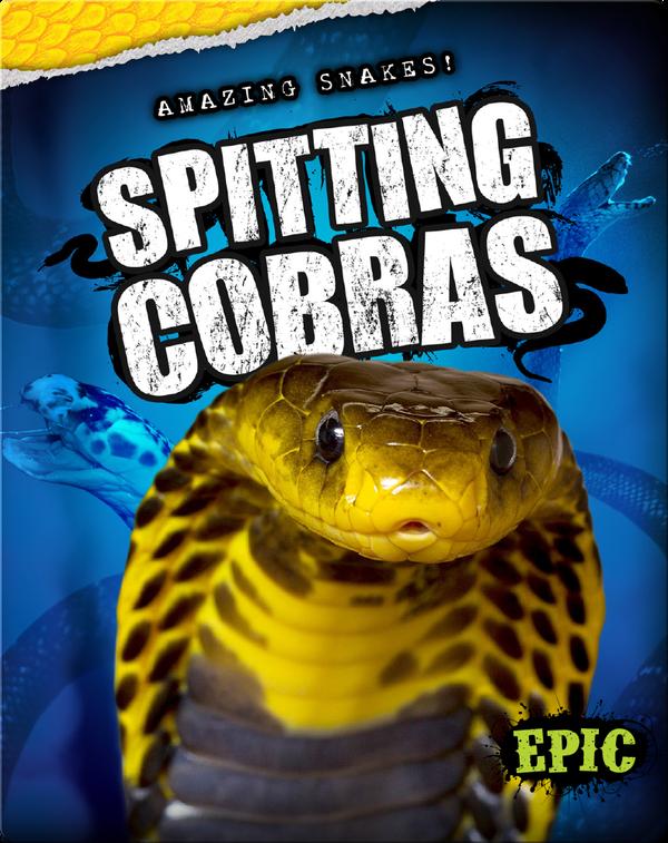 Amazing Snakes! Spitting Cobras