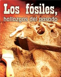 Los fósiles, hallazgos del pasado