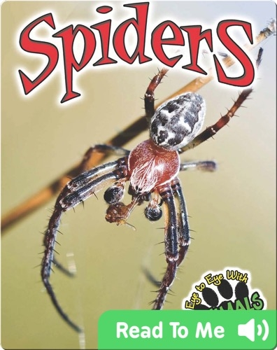 Eye to Eye With Animals: Spiders
