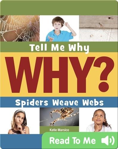 Spiders Weave Webs