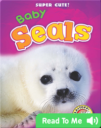 Super Cute! Baby Seals