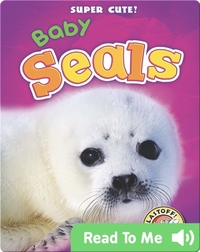 Super Cute! Baby Seals