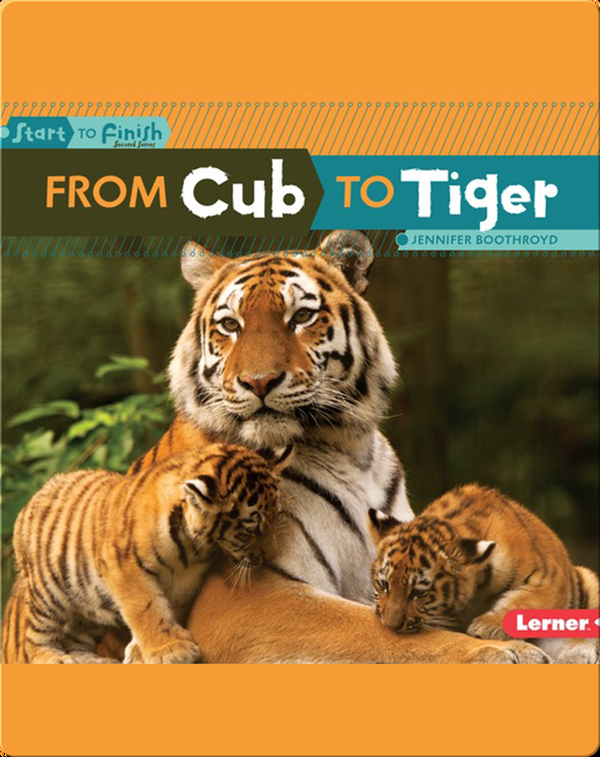 From Cub to Tiger