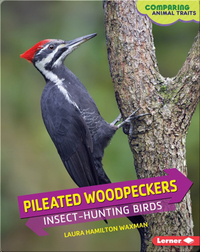 Pileated Woodpeckers: Insect-Hunting Birds