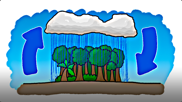 Which Came First - The Rain or the Rainforest?