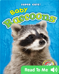 Super Cute! Baby Raccoons