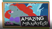 SciShow Kids: What's a Manatee?