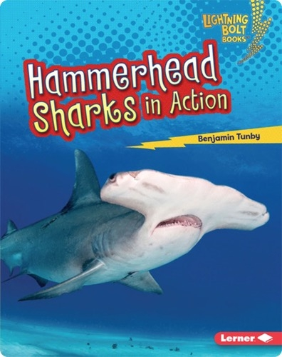 Hammerhead Sharks in Action