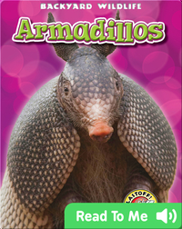 Backyard Wildlife: Armadillos
