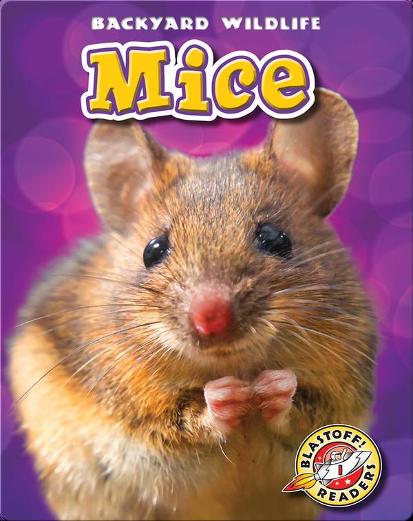 Backyard Wildlife: Mice