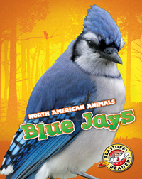 North American Animals: Blue Jays