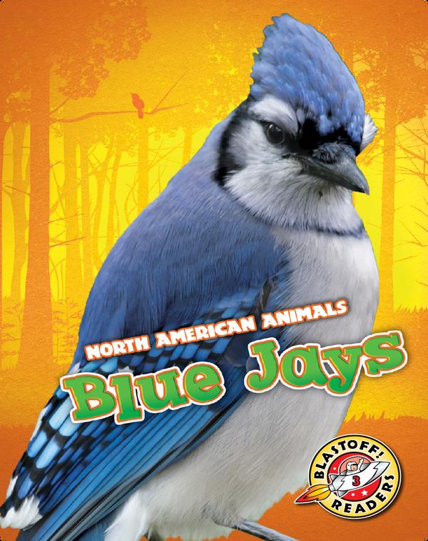 North American Animals: Blue Jays