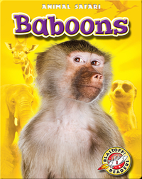Baboons: Animal Safari