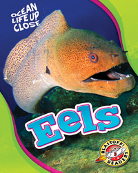 Ocean Life Up Close: Eels