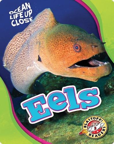 Ocean Life Up Close: Eels
