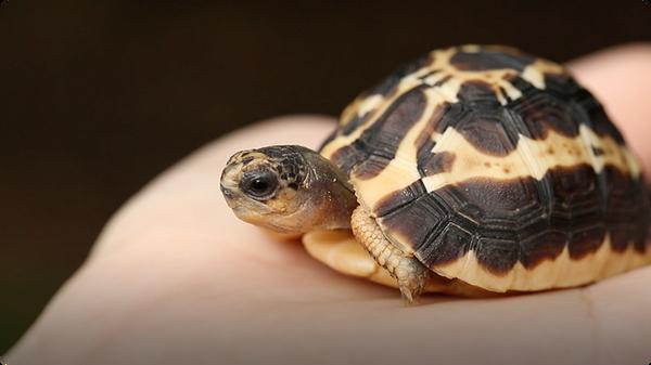 Illegal Pet Trade: Help Stop Wildlife Trafficking