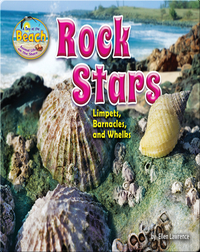 Rock Stars: Limpets, Barnacles, and Whelks