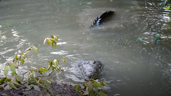Gabby Wild and the American Crocodiles