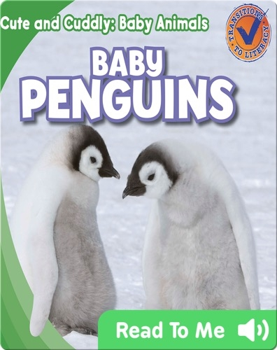 Cute and Cuddly: Baby Penguins