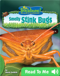 Smelly Stink Bugs