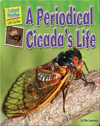 A Periodical Cicada's Life