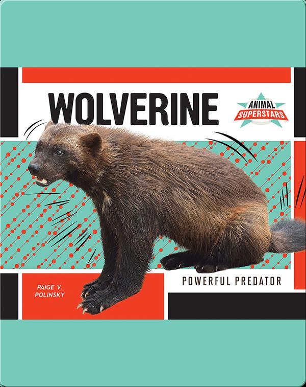 Wolverine: Powerful Predator