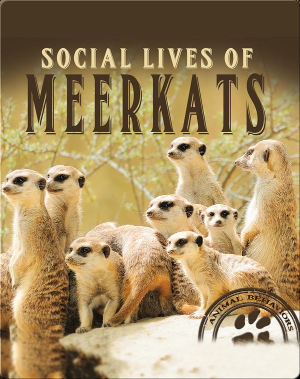 Social Lives of Meerkats