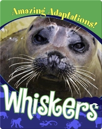 Whiskers