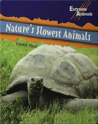 Nature's Slowest Animals