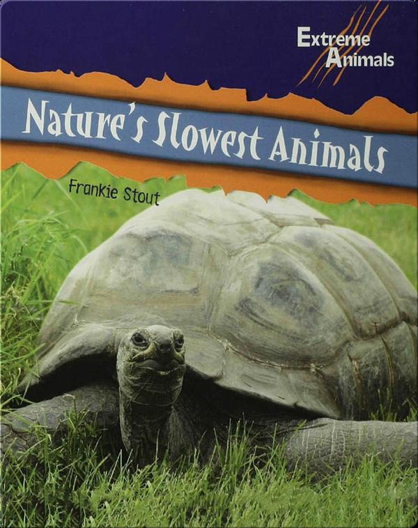 Nature's Slowest Animals
