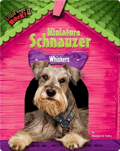 Miniature Schnauzer: Whiskers