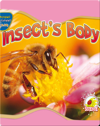 Insect's Body