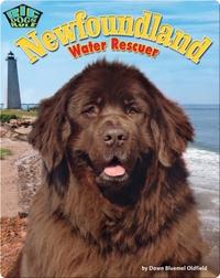 Newfoundland: Water Rescuer