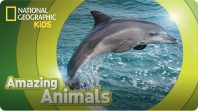 Amazing Animals: Bottlenose Dolphin