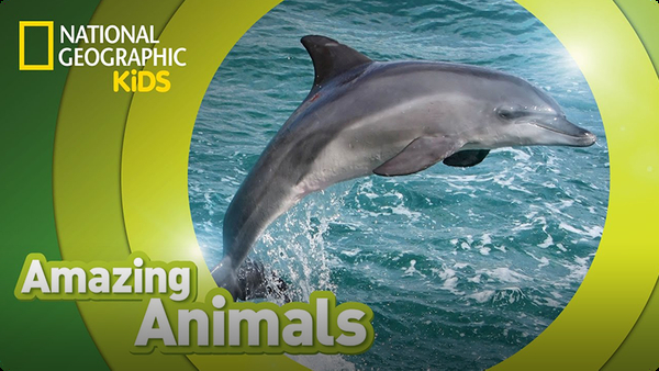 Amazing Animals: Bottlenose Dolphin