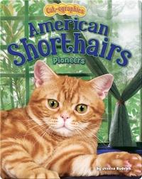 American Shorthairs: Pioneers