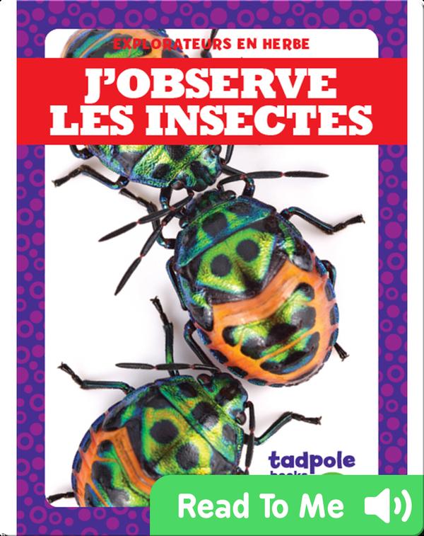 J'observe les insectes