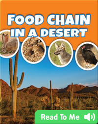 Food Chain In A Desert