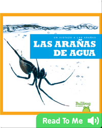 Las arañas de agua