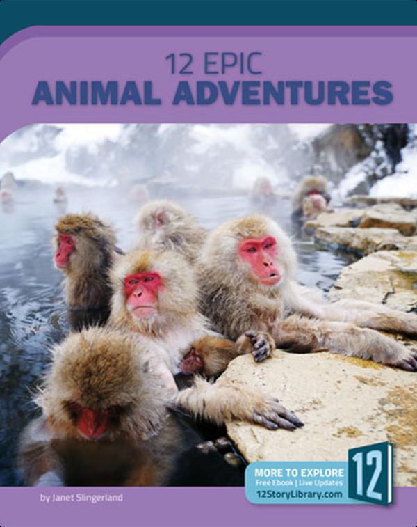 12 Epic Animal Adventures