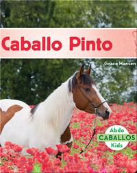 Caballo Pinto