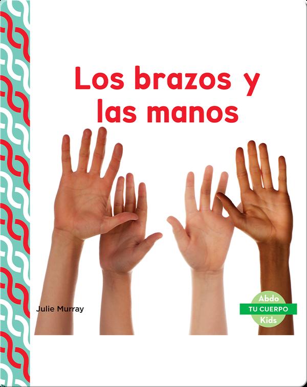 Los brazos y las manos