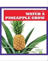 Watch a Pineapple Grow