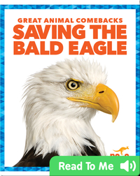 Saving the Bald Eagle