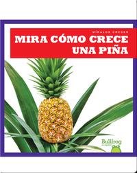 Mira cómo crece una piña (Watch a Pineapple Grow)
