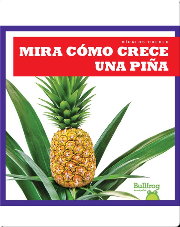 Mira cómo crece una piña (Watch a Pineapple Grow)