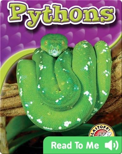 Pythons: Snakes Alive