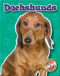 Dachshunds: Dog Breeds